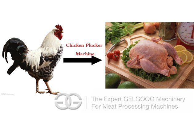 how to make a chicken plucker machine